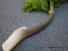 Alexanders stem recipe smyrnium olusatrum
