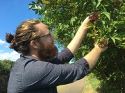 Jason Irving collecting elderberries in London