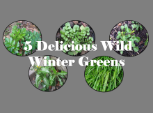 5 delicous wild winter greens B