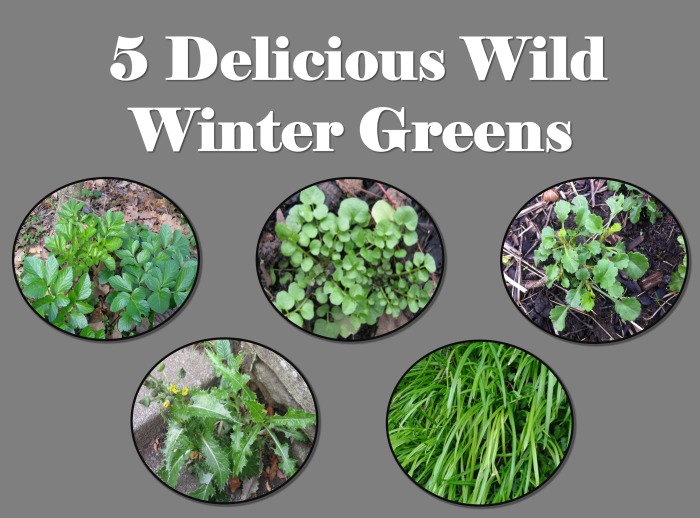 5 delicous wild winter greens title