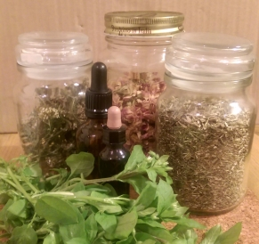 Fresh chickweed in front of jars of dried herbal medicines and two small tincture dropper bottles.