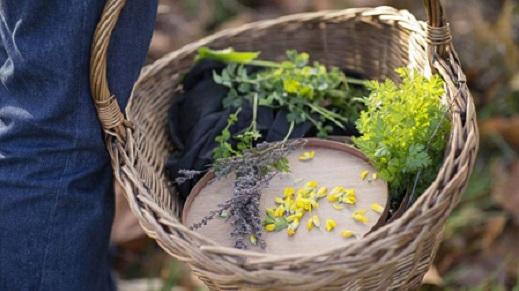 basket of foraged plants 520 x 390